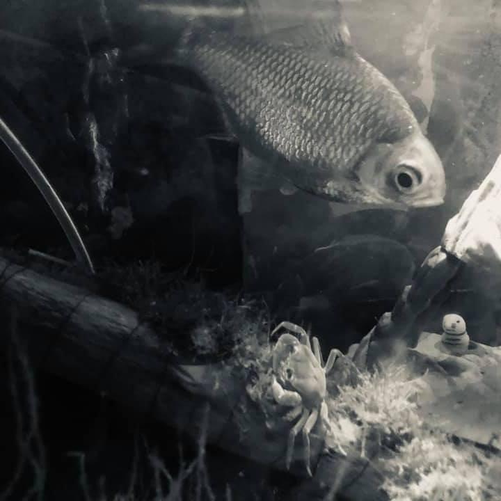 Fishy_1583934107.jpg